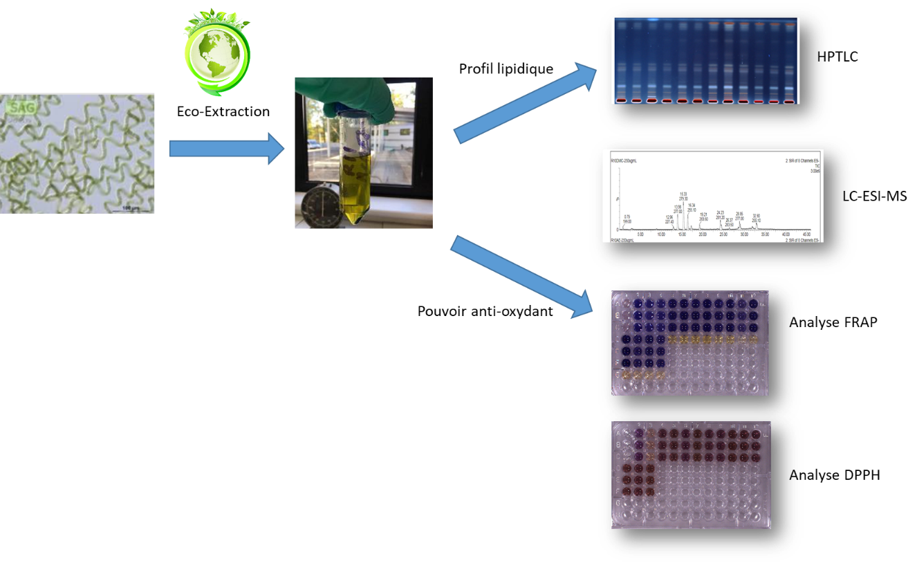 Biomasse microalgale